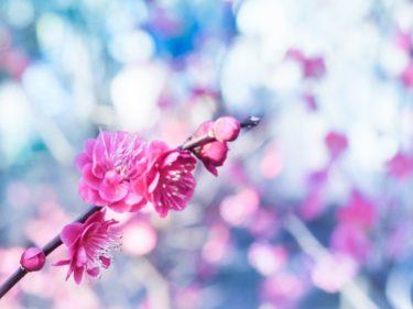 【初心者向け】花写真を編集してみよう!(梅の花編)