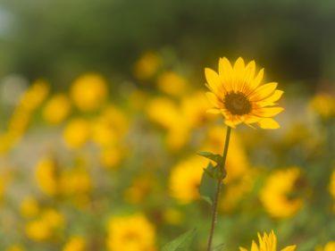 【写真スポット】夏の葛西臨海公園で撮影できる写真をご紹介!